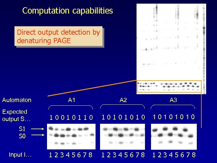 Computation capabilities Direct output detection by denaturing PAGE Automaton A 1 A 2 A