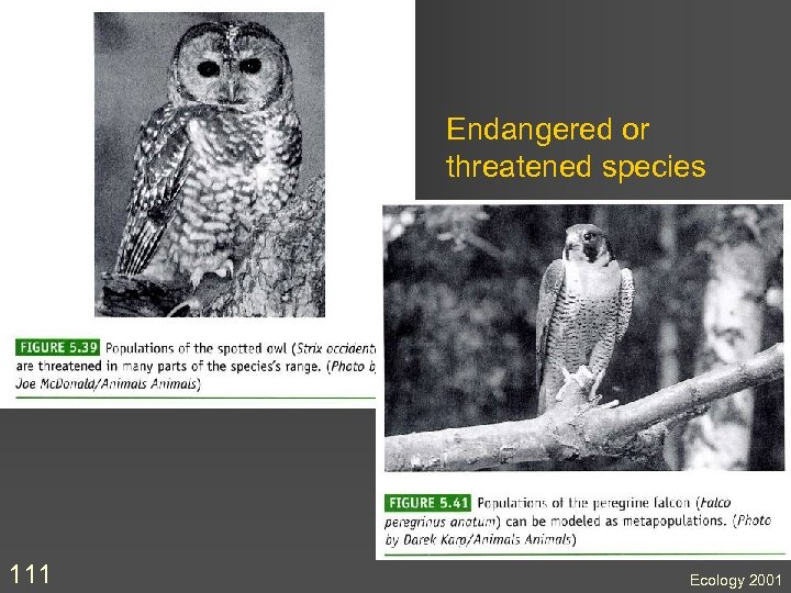 Endangered or threatened species 111 Ecology 2001