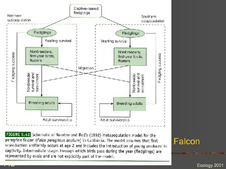 Falcon 112 Ecology 2001