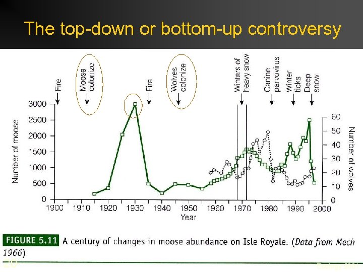 The top-down or bottom-up controversy 20 Ecology 2001
