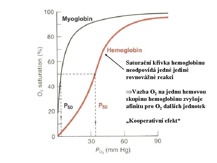 Saturační křivka hemoglobinu neodpovídá jedné jediné rovnovážné reakci ÞVazba O 2 na jednu hemovou