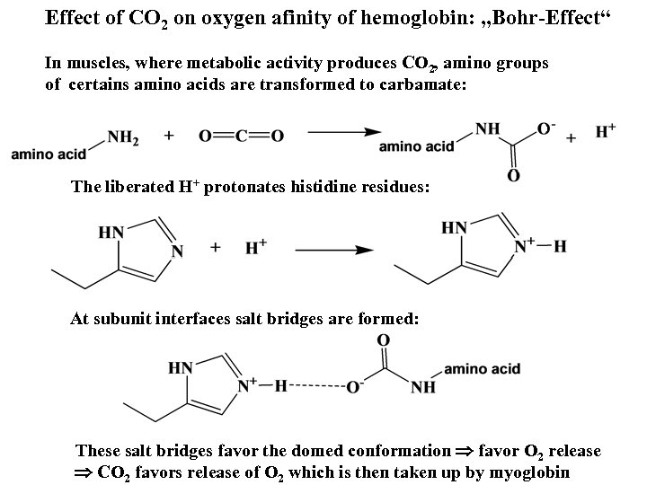 """Effect of CO 2 on oxygen afinity of hemoglobin: """"Bohr-Effect"""" In muscles, where metabolic"""
