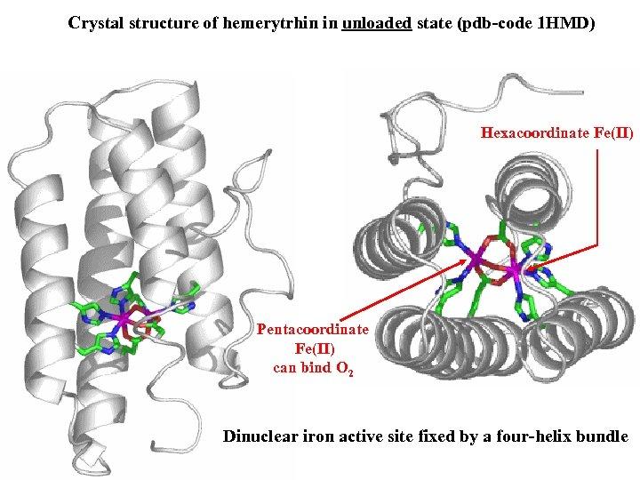 Crystal structure of hemerytrhin in unloaded state (pdb-code 1 HMD) Hexacoordinate Fe(II) Pentacoordinate Fe(II)
