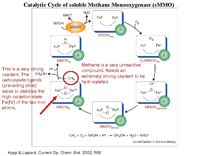 Catalytic Cycle of soluble Methane Monooxygenase (s. MMO) This is a very strong oxydant.