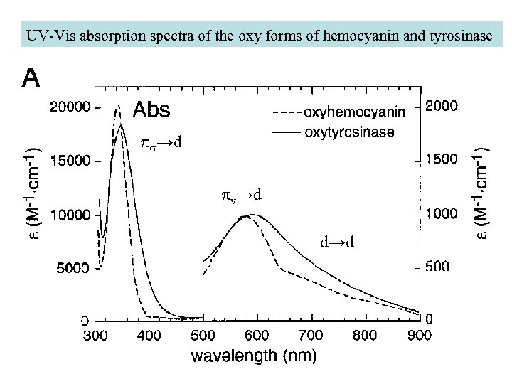 UV-Vis absorption spectra of the oxy forms of hemocyanin and tyrosinase ps→d pv→d d→d