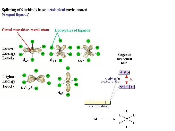 Splitting of d orbitals in an octahedral environment (6 equal ligands) Cetral transition metal