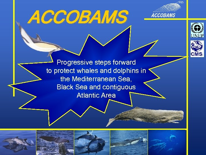 ACCOBAMS Progressive steps forward to protect whales and dolphins in the Mediterranean Sea, Black