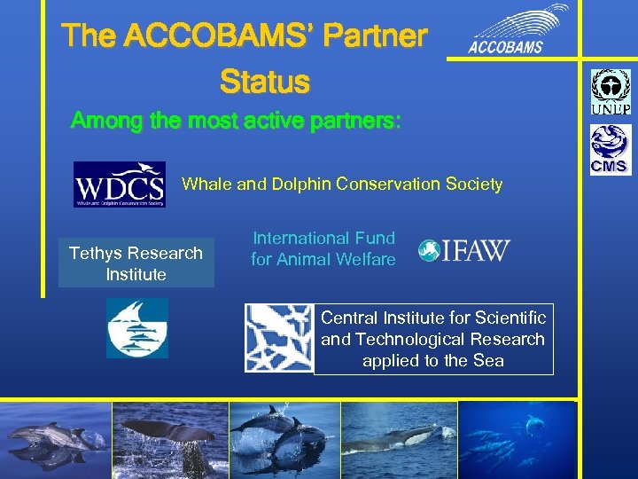 The ACCOBAMS' Partner Status Among the most active partners: Whale and Dolphin Conservation Society
