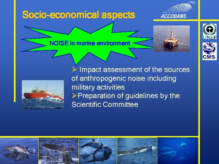 Socio-economical aspects NOISE in marine environment Ø Impact assessment of the sources of anthropogenic