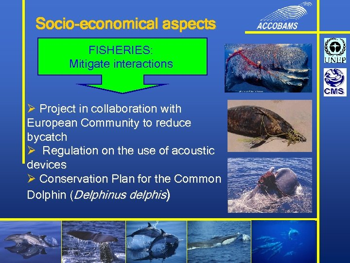 Socio-economical aspects FISHERIES: Mitigate interactions Ø Project in collaboration with European Community to reduce