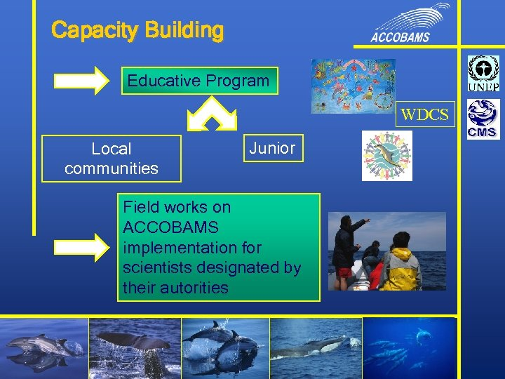 Capacity Building Educative Program WDCS Local communities Junior Field works on ACCOBAMS implementation for