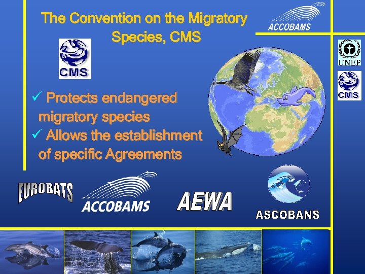 The Convention on the Migratory Species, CMS ü Protects endangered migratory species ü Allows
