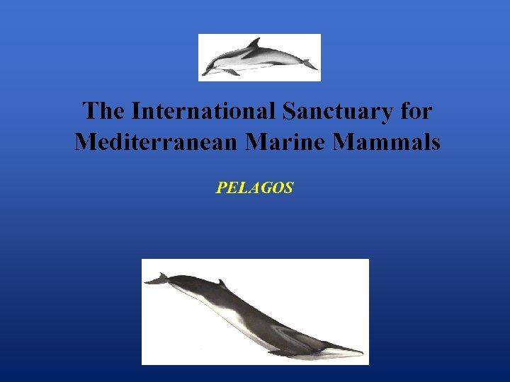 The International Sanctuary for Mediterranean Marine Mammals PELAGOS