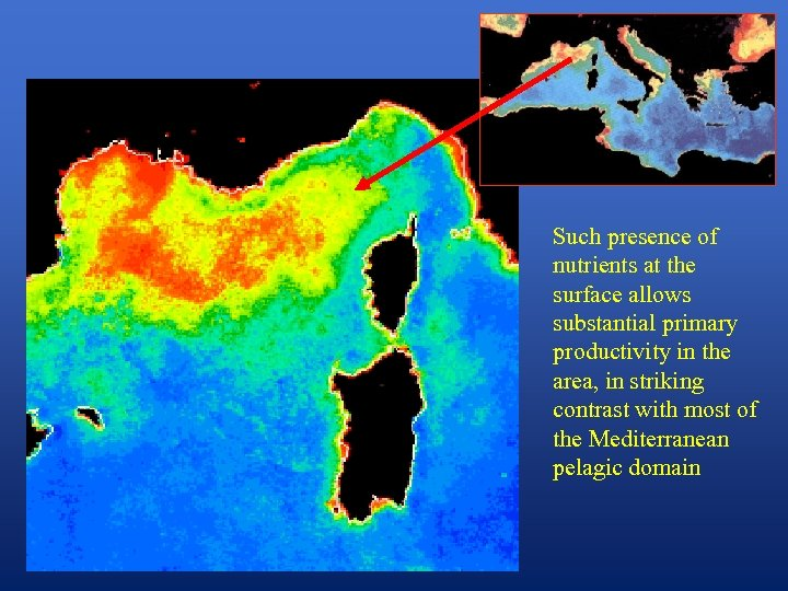Such presence of nutrients at the surface allows substantial primary productivity in the area,