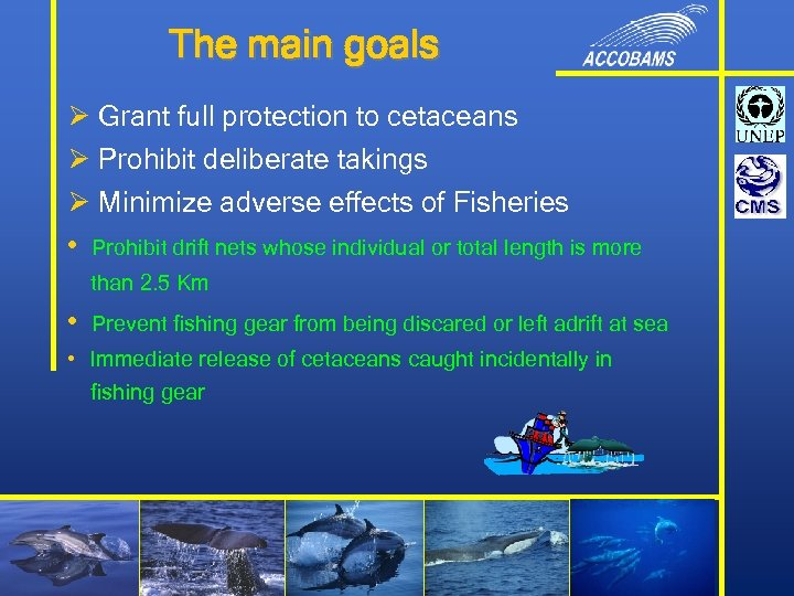 The main goals Ø Grant full protection to cetaceans Ø Prohibit deliberate takings Ø