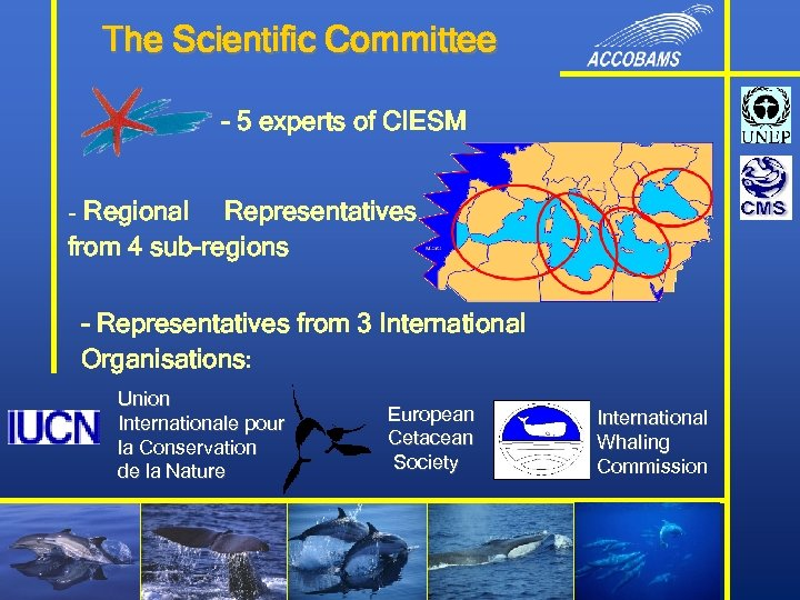 The Scientific Committee - 5 experts of CIESM - Regional Representatives from 4 sub-regions