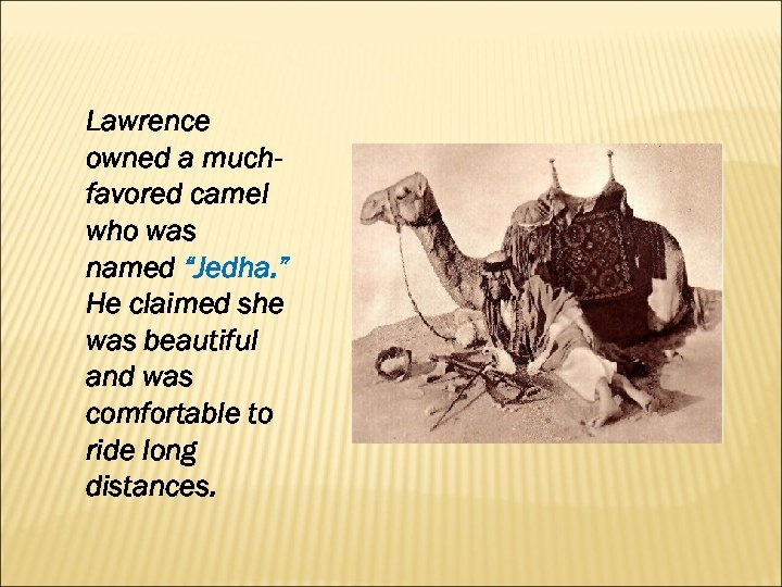 "Lawrence owned a muchfavored camel who was named ""Jedha. "" He claimed she was"