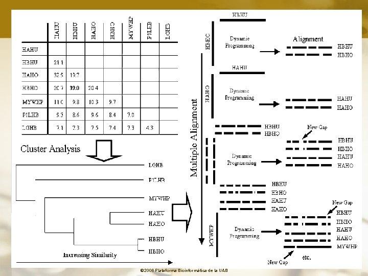 © 2006 Plataforma Bioinformàtica de la UAB