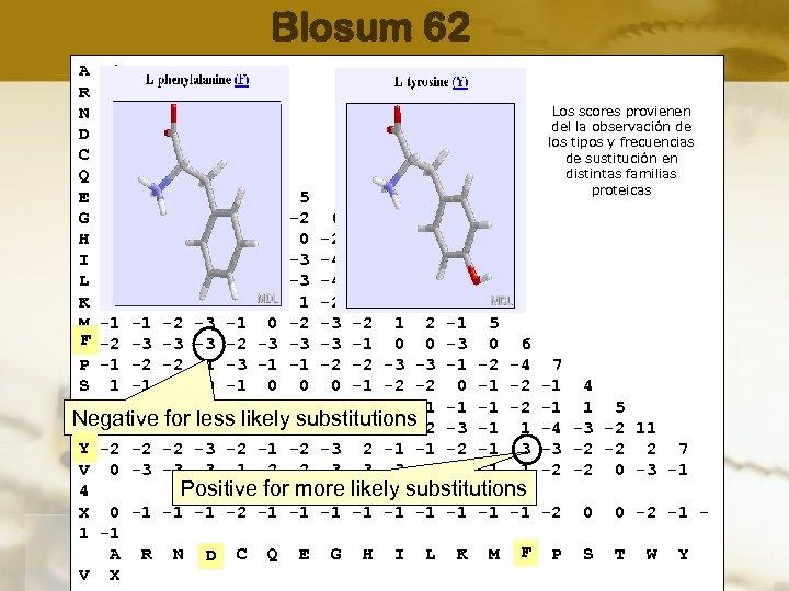 Blosum 62 A 4 R -1 5 Los scores provienen N -2 0 6