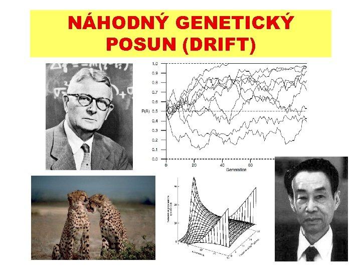 NÁHODNÝ GENETICKÝ POSUN (DRIFT)