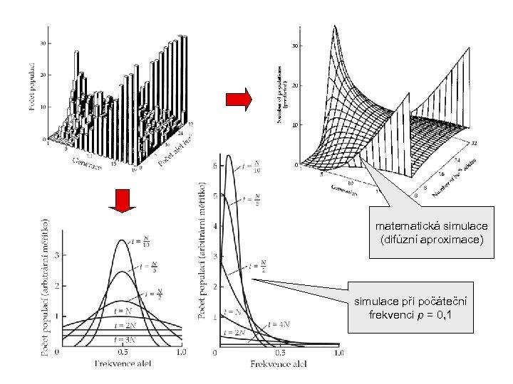 matematická simulace (difúzní aproximace) simulace při počáteční frekvenci p = 0, 1