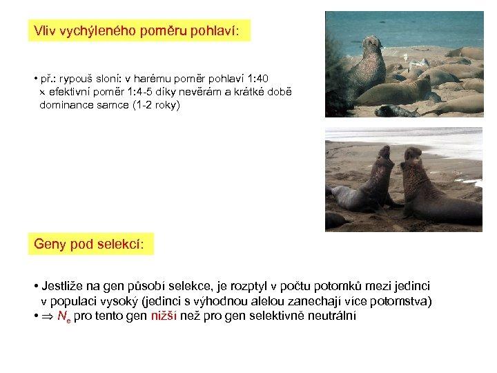 Vliv vychýleného poměru pohlaví: • př. : rypouš sloní: v harému poměr pohlaví 1: