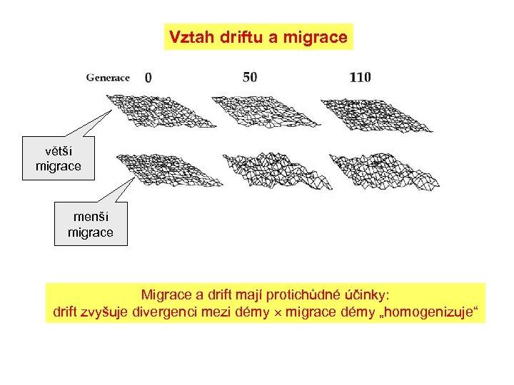 Vztah driftu a migrace větší migrace menší migrace Migrace a drift mají protichůdné účinky: