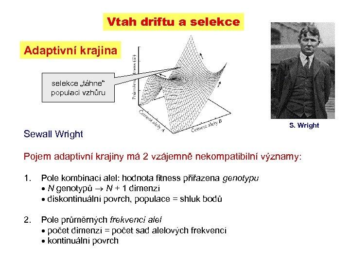 """Vtah driftu a selekce Adaptivní krajina selekce """"táhne"""" populaci vzhůru Sewall Wright S. Wright"""