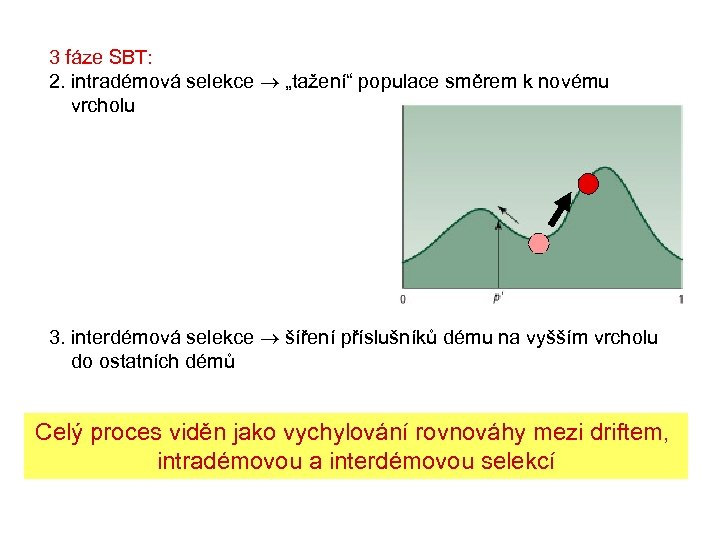 """3 fáze SBT: 2. intradémová selekce """"tažení"""" populace směrem k novému vrcholu 3. interdémová"""
