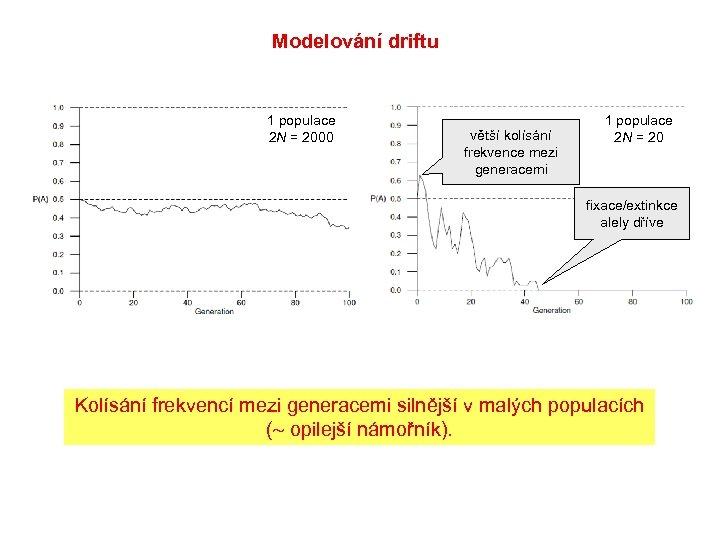 Modelování driftu 1 populace 2 N = 2000 větší kolísání frekvence mezi generacemi 1