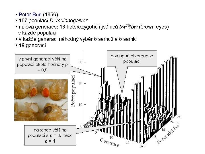 • Peter Buri (1956) • 107 populací D. melanogaster • nulová generace: 16