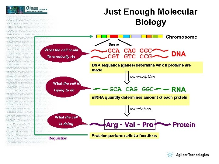Just Enough Molecular Biology Chromosome Gene What the cell could Theoretically do GCA CAG