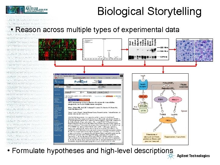 Biological Storytelling • Reason across multiple types of experimental data • Formulate hypotheses and