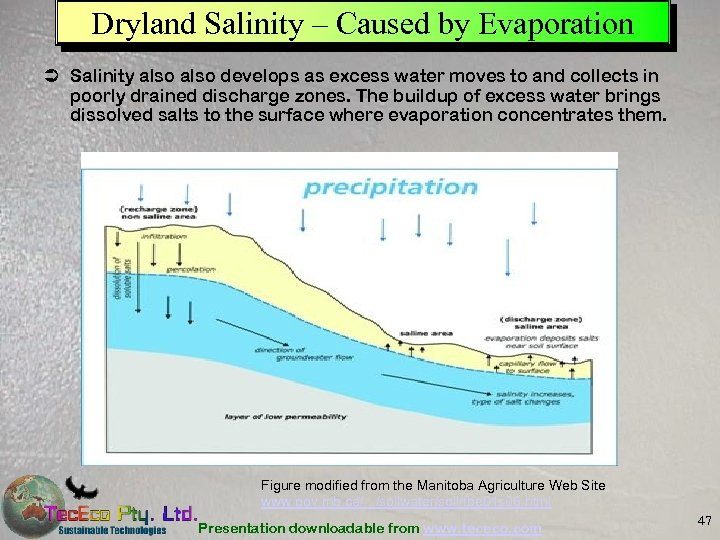 Dryland Salinity – Caused by Evaporation Ü Salinity also develops as excess water moves