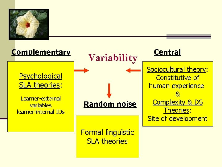 Complementary Variability Psychological SLA theories: Learner-external variables learner-internal IDs Random noise Formal linguistic SLA