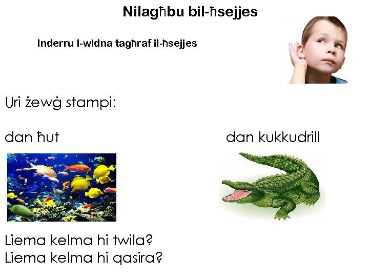 Nilagħbu bil-ħsejjes Inderru l-widna tagħraf il-ħsejjes Uri żewġ stampi: dan ħut Liema kelma hi