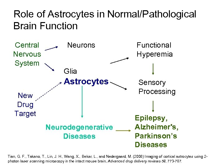 Role of Astrocytes in Normal/Pathological Brain Function Central Nervous System Neurons Functional Hyperemia Glia