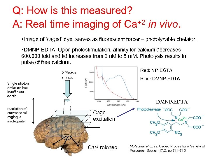Q: How is this measured? A: Real time imaging of Ca+2 in vivo. §Image