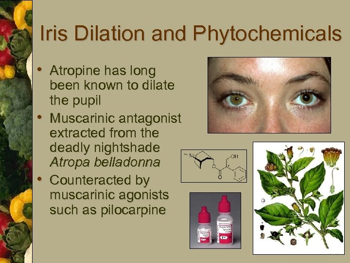 Iris Dilation and Phytochemicals • Atropine has long • • been known to dilate