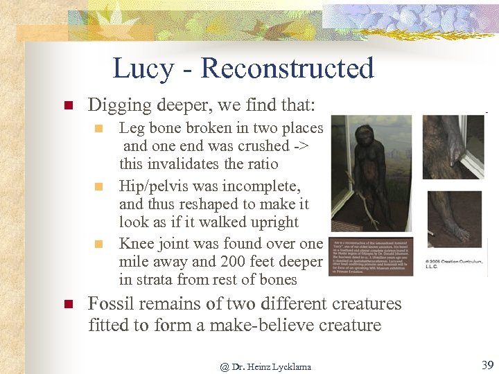 Lucy - Reconstructed n Digging deeper, we find that: n n Leg bone broken