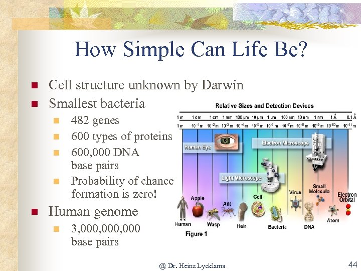 How Simple Can Life Be? n n Cell structure unknown by Darwin Smallest bacteria