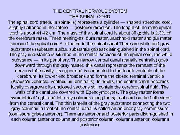 THE CENTRAL NERVOUS SYSTEM THE SPINAL CORD The spinal cord (medulla spina lis) represents