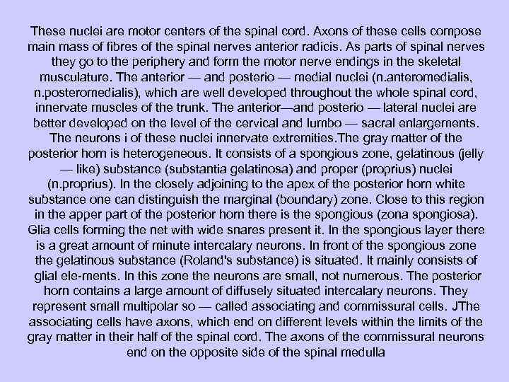 These nuclei are motor centers of the spinal cord. Axons of these cells compose