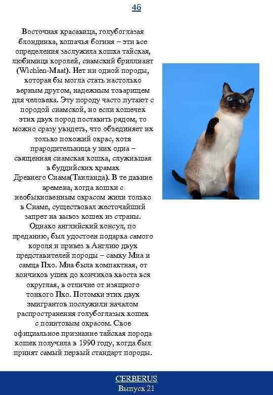 46 Восточная красавица, голубоглазая блондинка, кошачья богиня – эти все определения заслужила кошка тайская,
