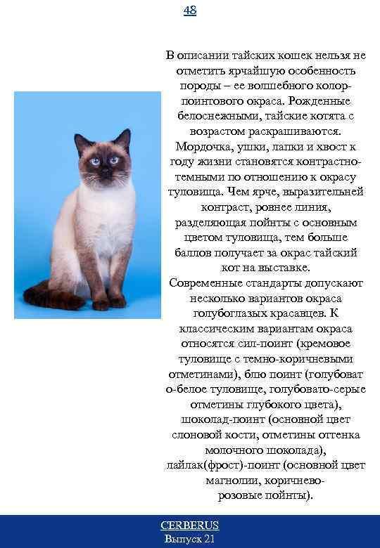 48 В описании тайских кошек нельзя не отметить ярчайшую особенность породы – ее волшебного