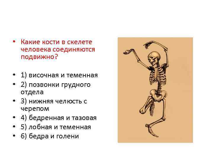 • Какие кости в скелете человека соединяются подвижно? • 1) височная и теменная