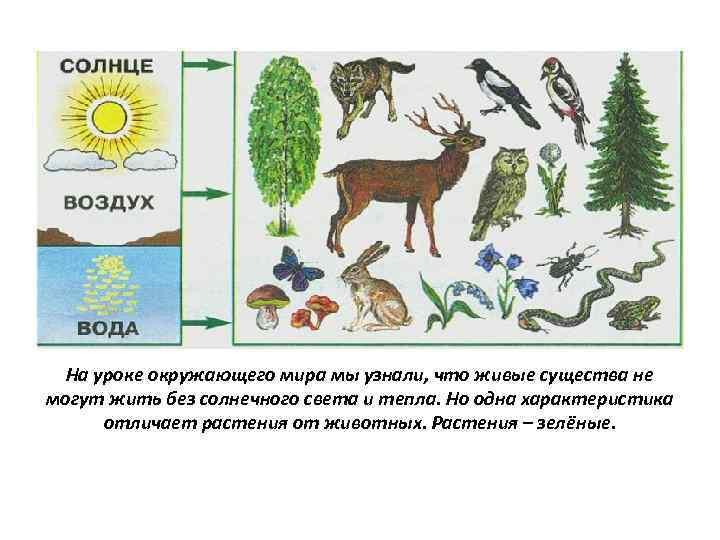 На уроке окружающего мира мы узнали, что живые существа не могут жить без солнечного