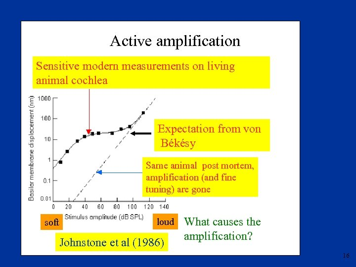 Active amplification Sensitive modern measurements on living animal cochlea Expectation from von Békésy Same