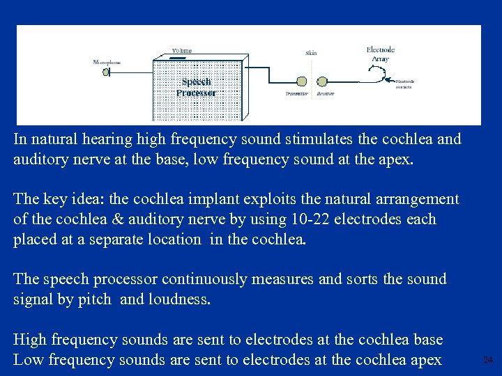 In natural hearing high frequency sound stimulates the cochlea and auditory nerve at the
