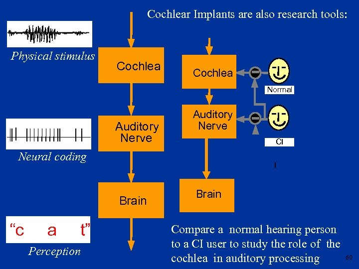 Cochlear Implants are also research tools: Physical stimulus Cochlea Normal Auditory Nerve CI Neural